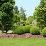 Landscaping Elgin IL